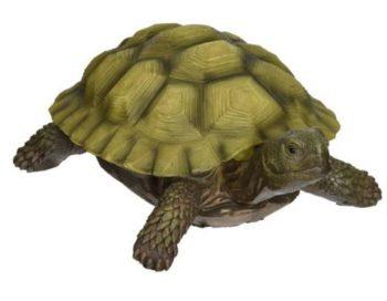 Aquariumfilter für Wasserschildkröten