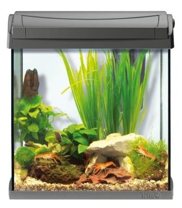 Tetra AquaArt Discovery Line Aquarium-Komplett-Set 30 Liter anthrazit (inklusive Tetra EasyCrystal Innenfilter, ideal für die Haltung von Krebsen und Garnelen) -